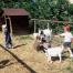 Petits travaux de la ferme au centre des Terrasses